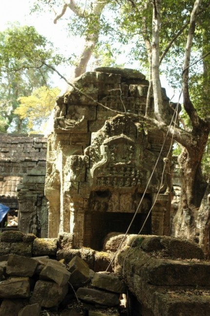 Ta Prohm - the temple of trees - Cambodia