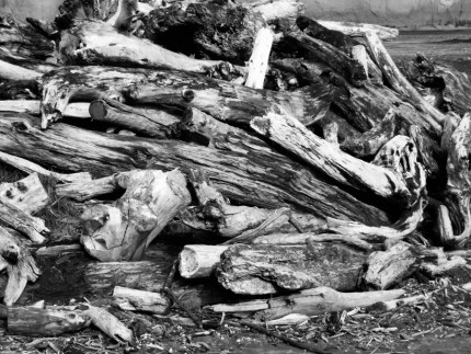 Dead wood - Rennie Photo